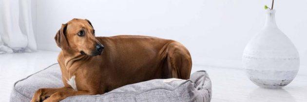 Ležišče za psa naj bo čim bolj udobno