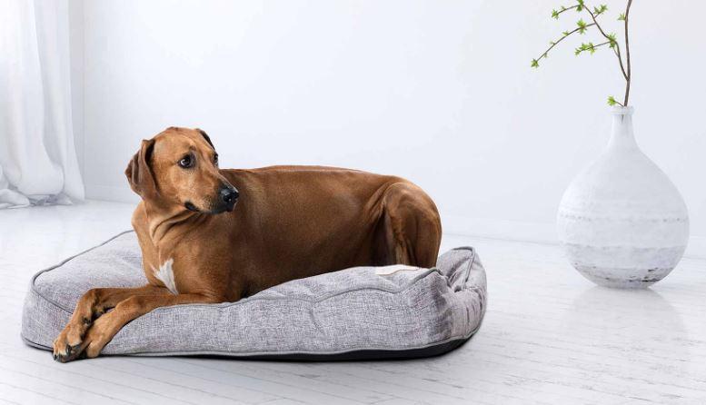 pasje postelje